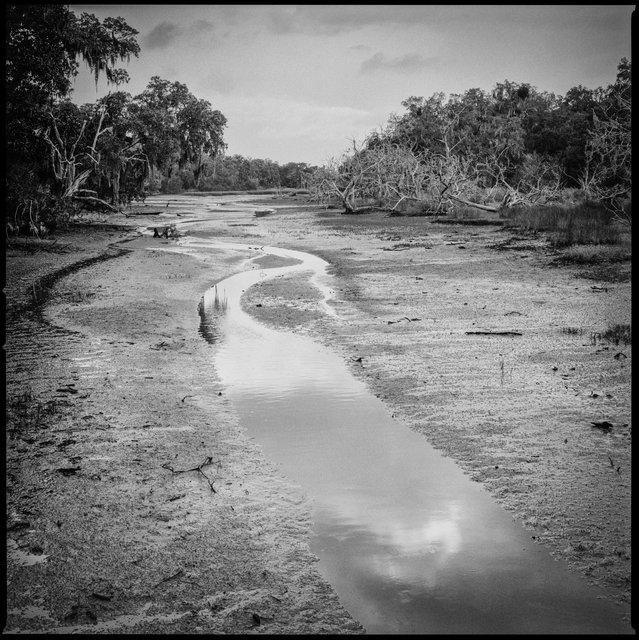 White Bridge Swamp Field Drain Creek, Low Tide, 2016
