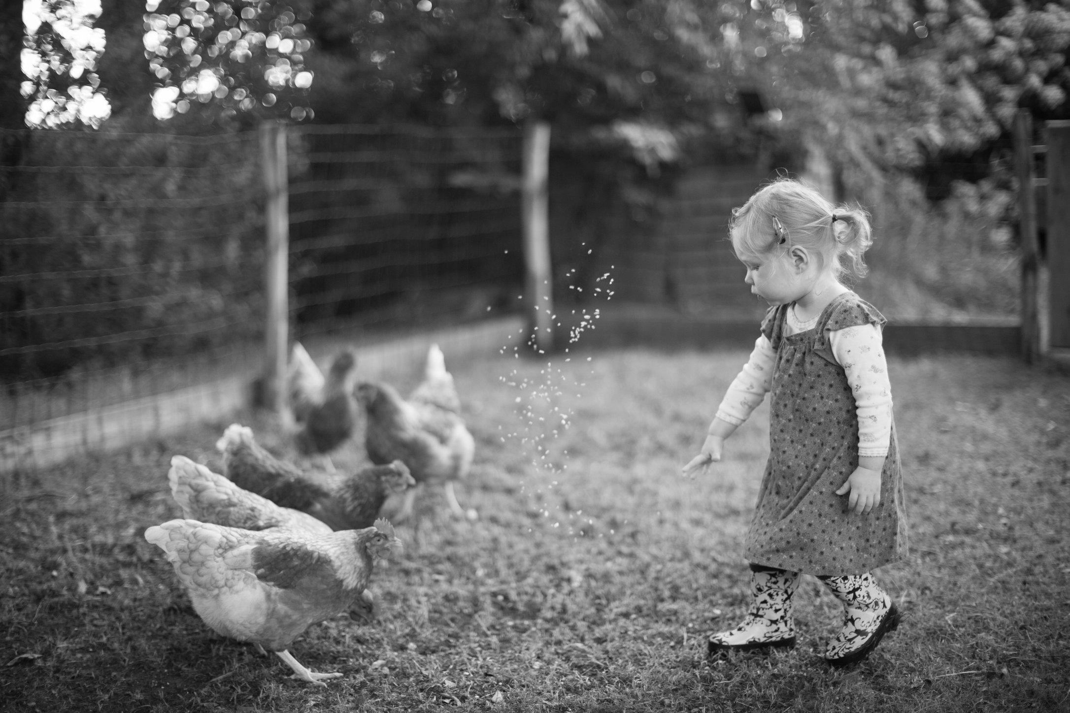 Portretfoto kind bij kippen
