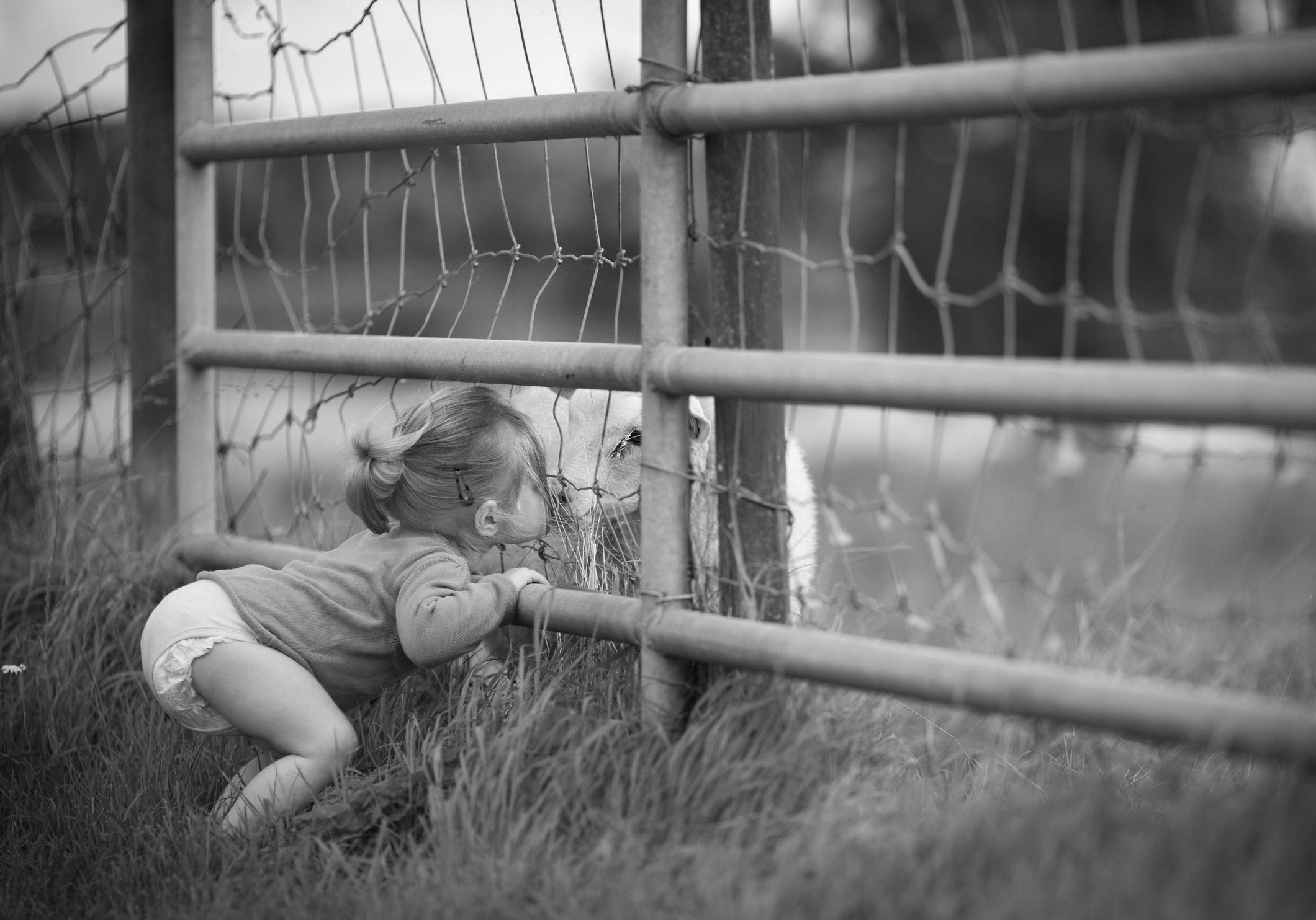 Portretfoto kind dat schaap kust - © Janneke Walter, kinderfotograaf omgeving Utrecht