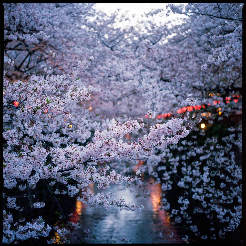 160404_Japan_107.jpg