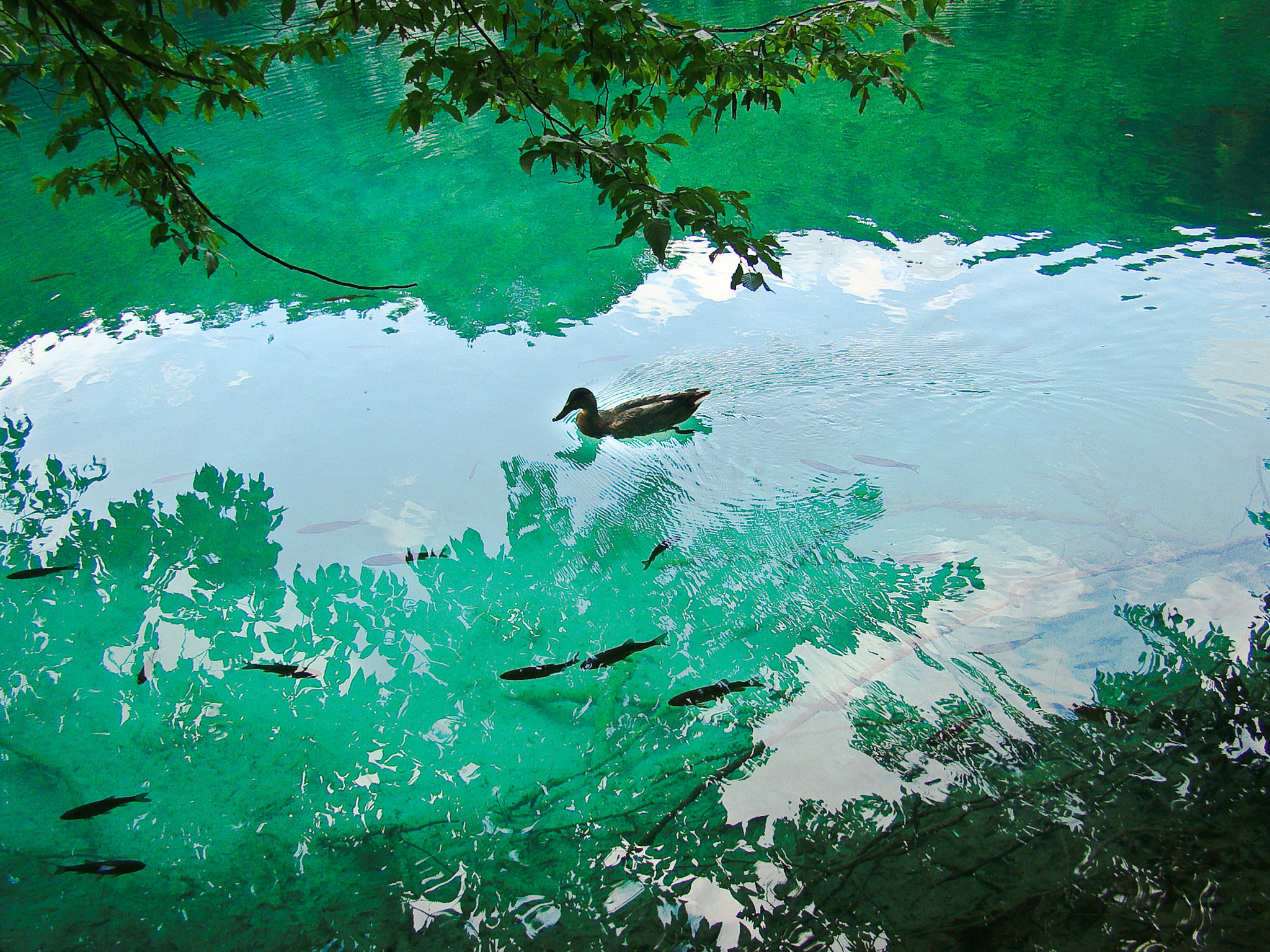 CROATIA 2011-11.jpg