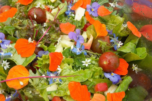 ©  6309006137 Kwekerij Eef Stel -  Dalfsen - Vitale groenten en kruiden - kweker voor de Librije.jpg