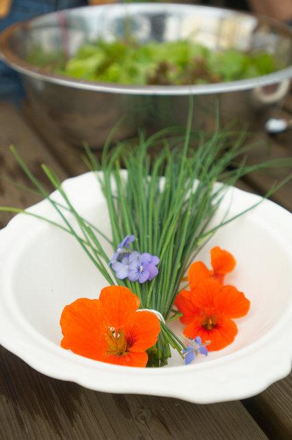 ©  6309006035 Kwekerij Eef Stel - Dalfsen -Vitale groenten en kruiden -  kweker voor de Librije.jpg