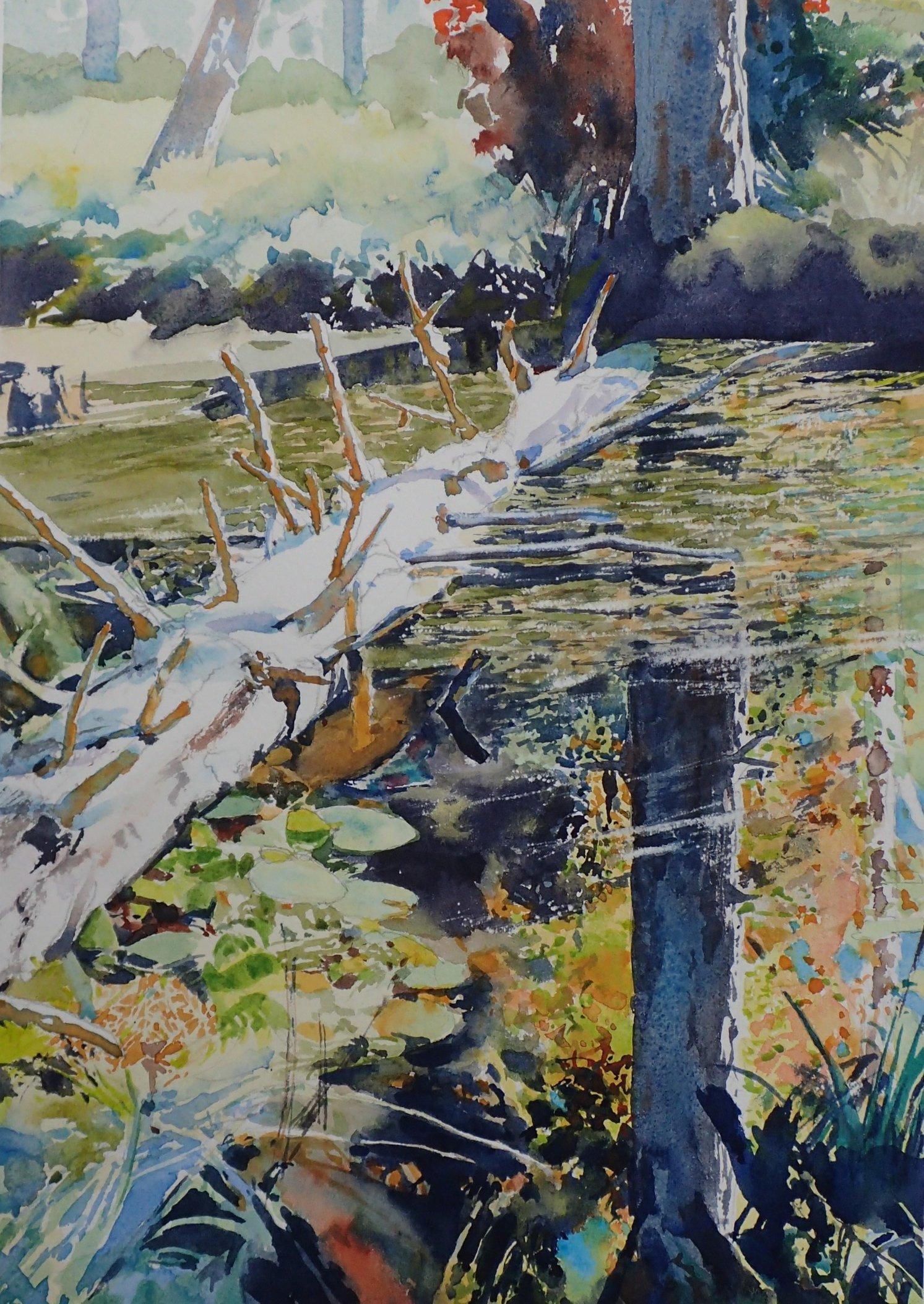 Galiano Beaver Pond