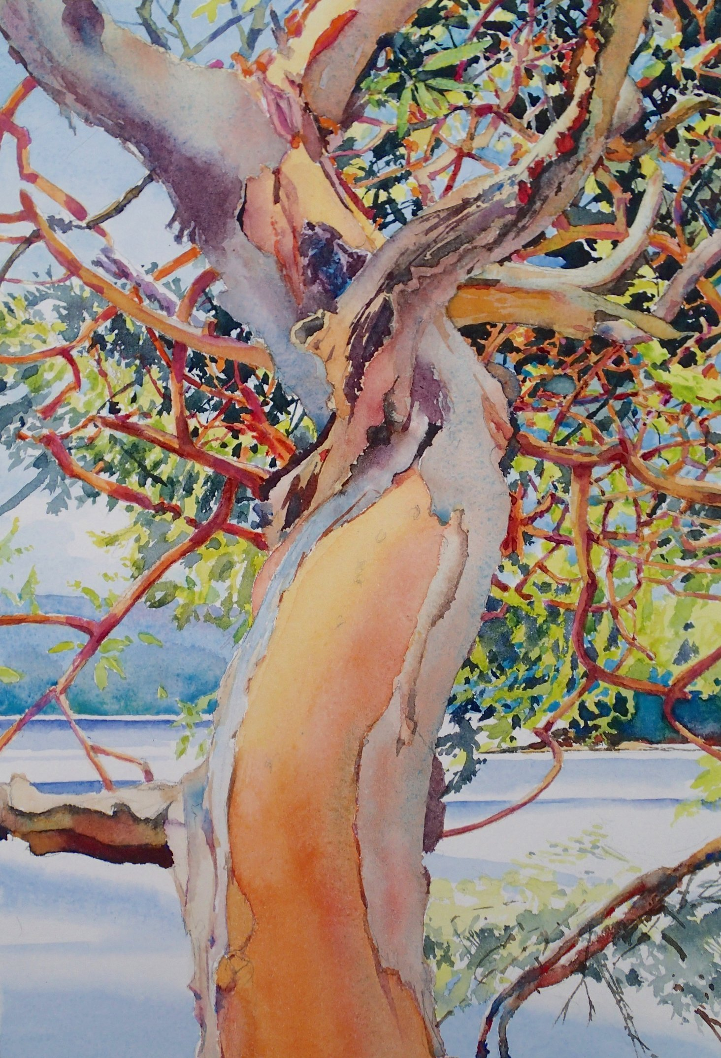 Galiano Arbutus