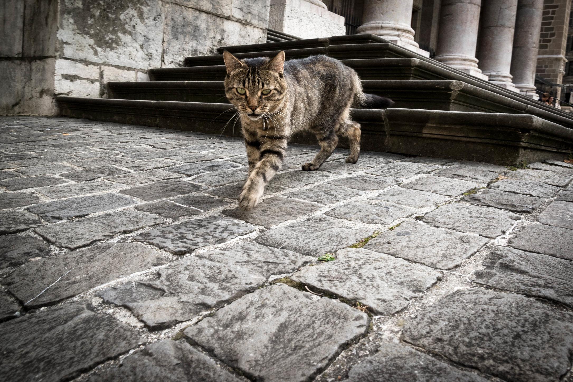 La Tigresse de Geneve