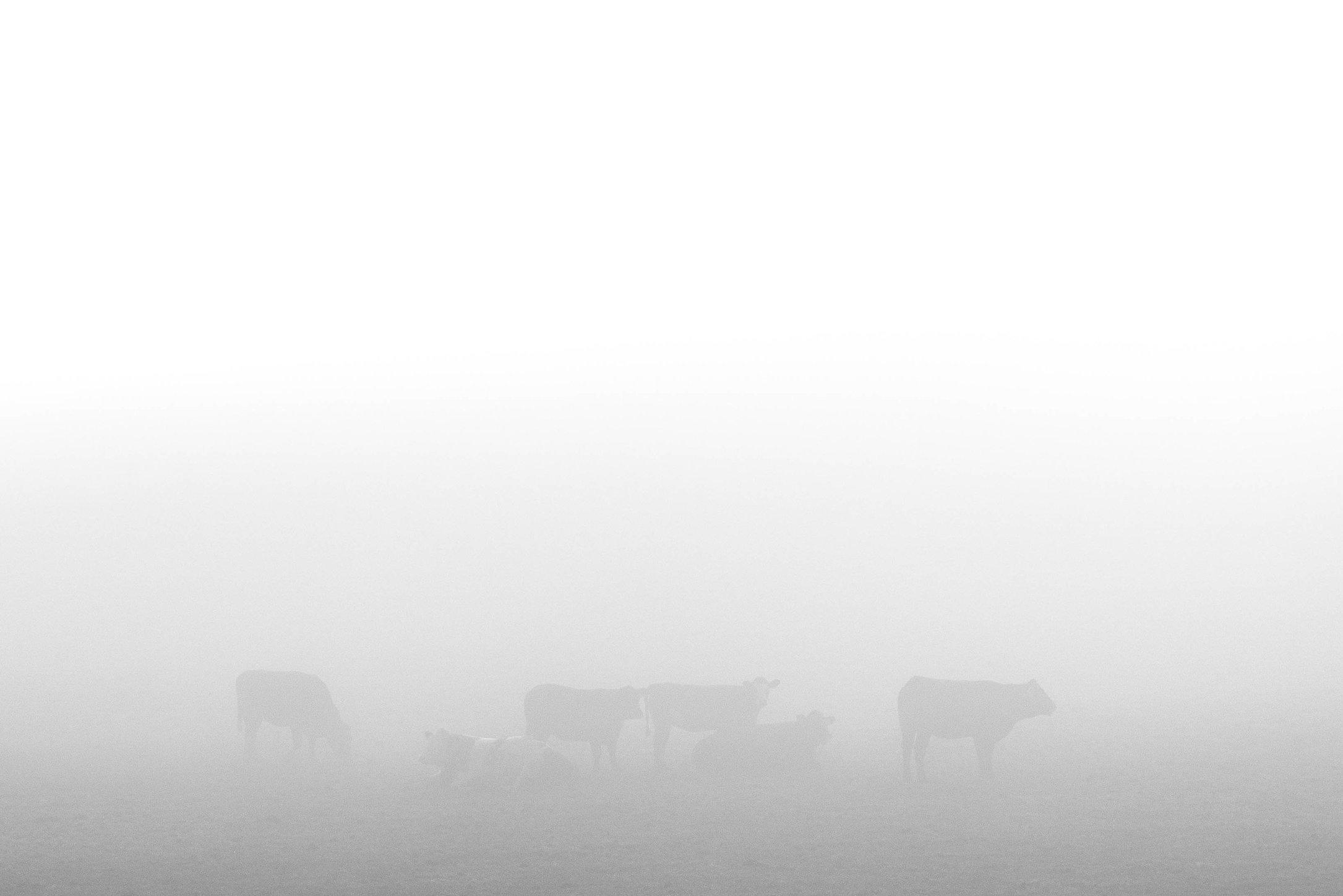 Ça c'est du Brouillard!