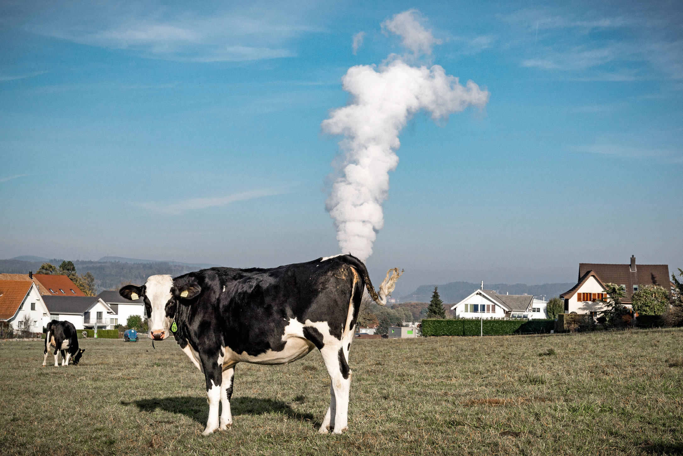 La vache qui pète.