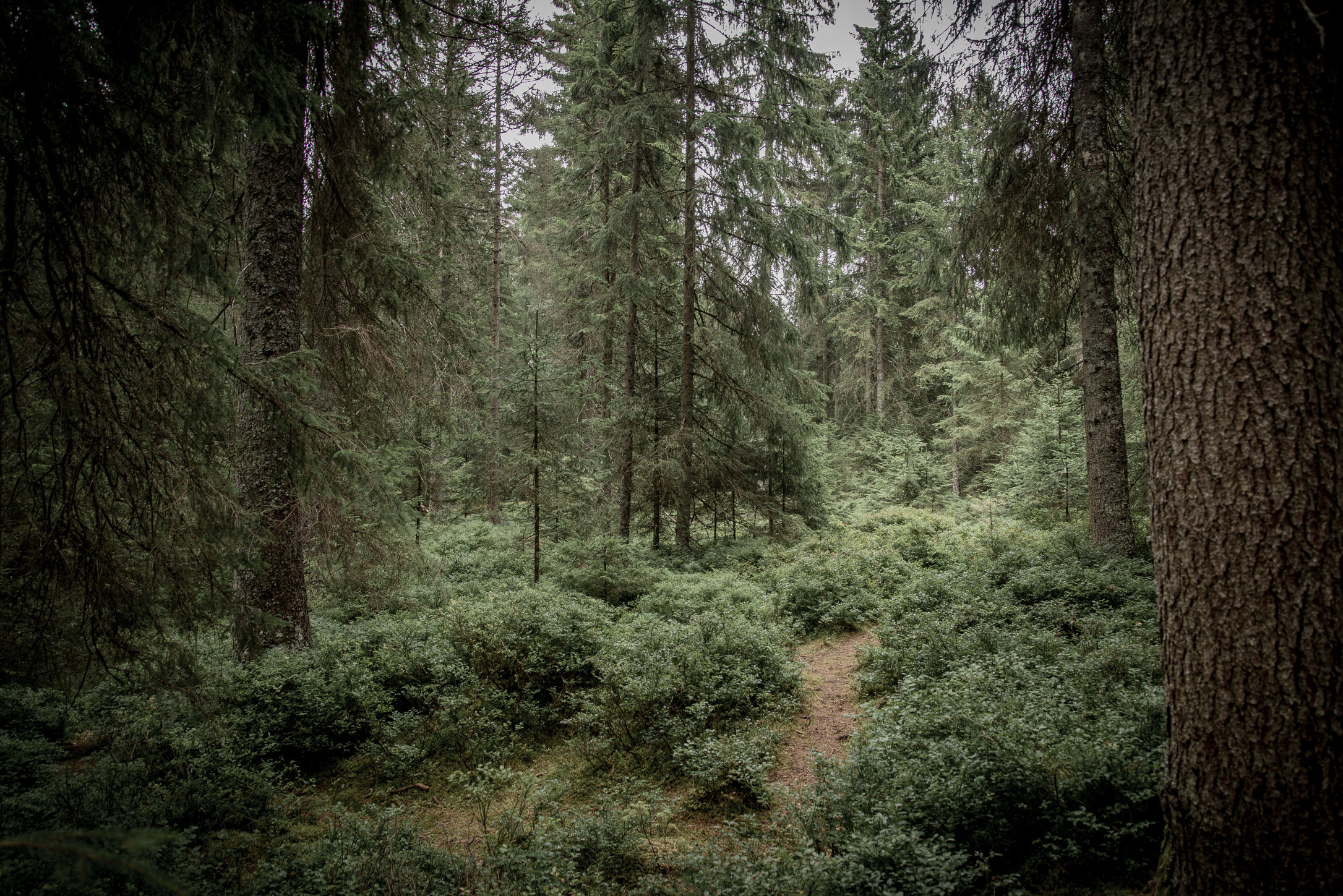 Zauberwald, Étang de la Gruère, Franches-Montagnes