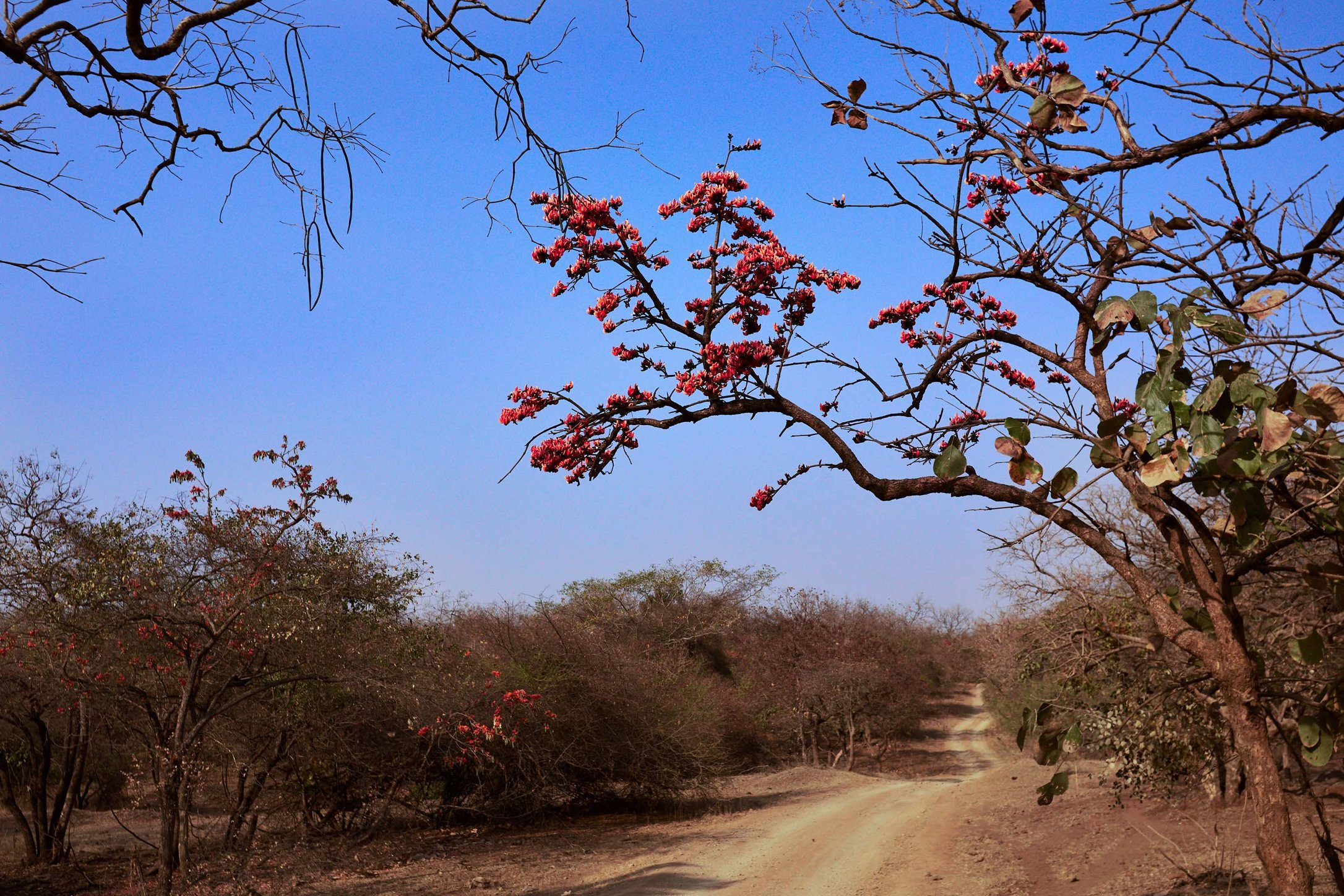 Pranidhi_Day5_Picture1.jpg