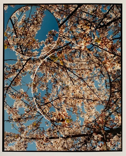 Turbulence, Cherry Blossom (No.3).jpeg