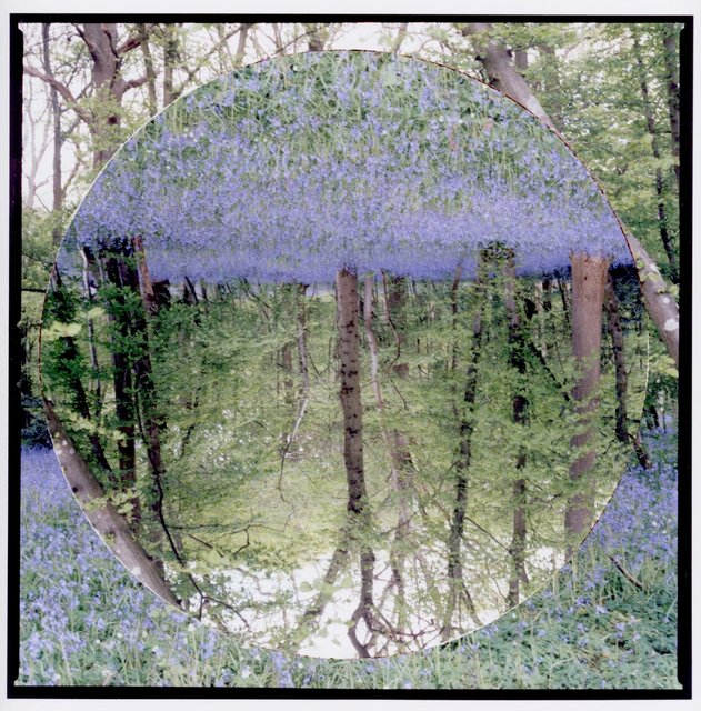 InTheBeginning(BluebellWood1) copy.jpg
