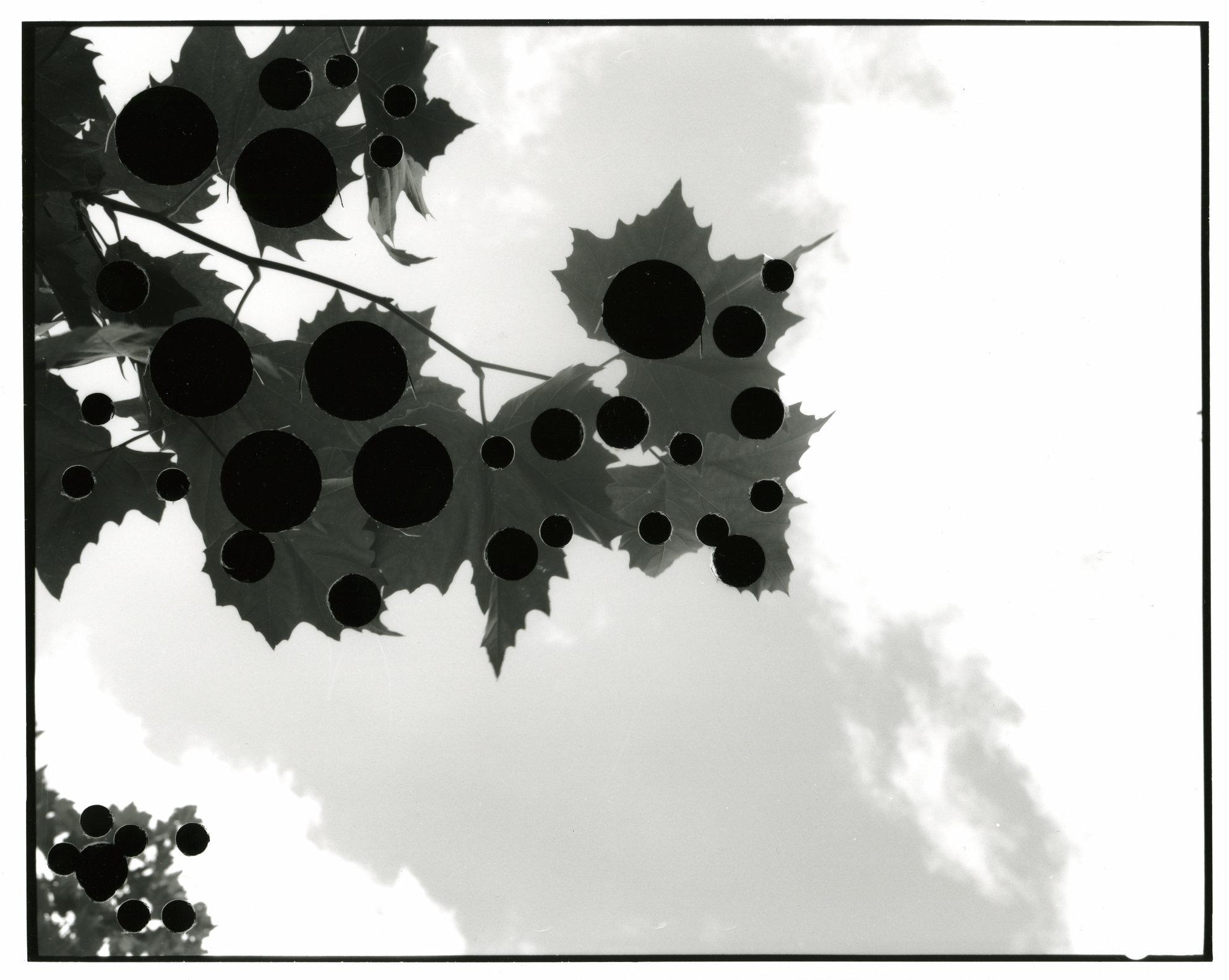 Shot4.jpg