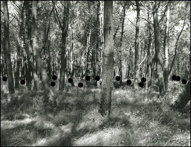 Hunting1.jpg