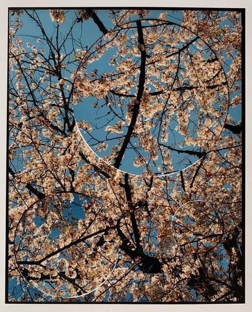 Turbulence, Cherry Blossom (No.2).jpeg