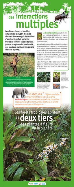 IRD-Forets-Panneau8-2011.jpg