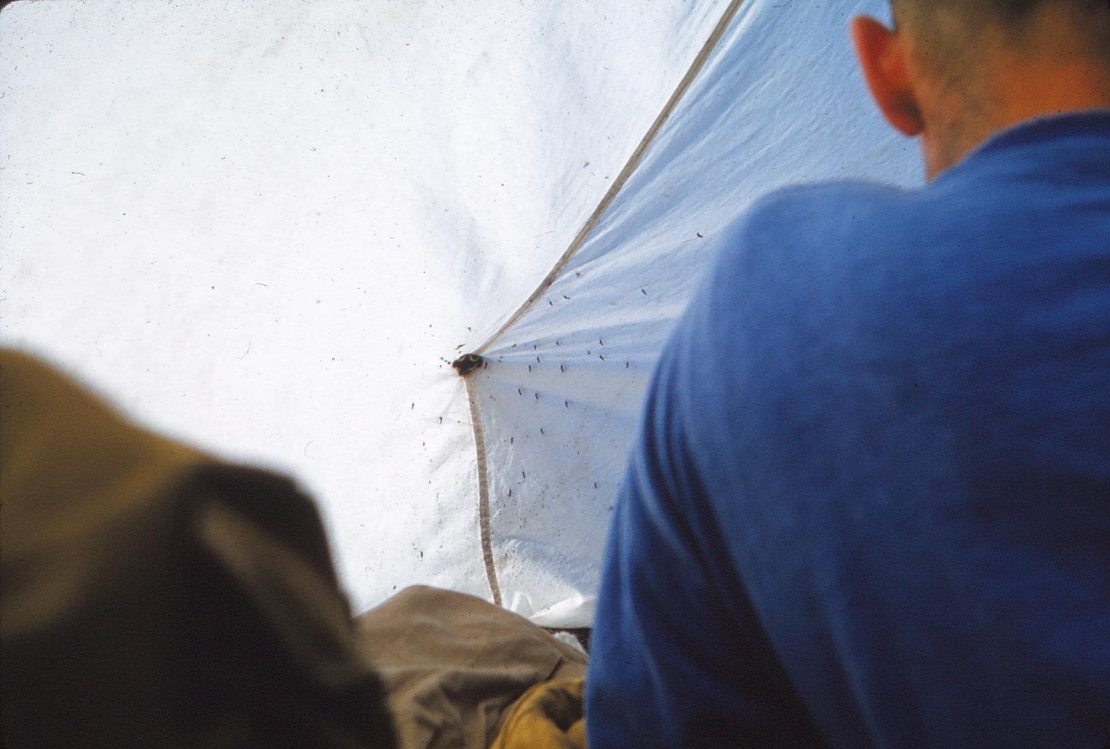 973 (9) Tent met muggen I