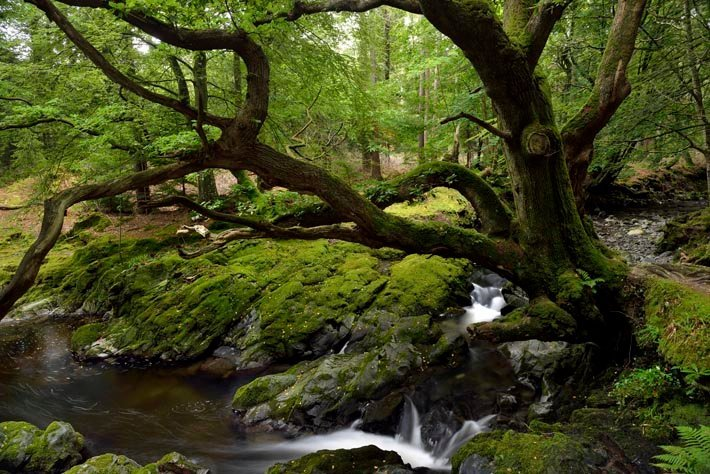 Tollymore Forest, Irlande