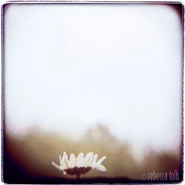 02-07-01-06 The Hope Daisy.jpg