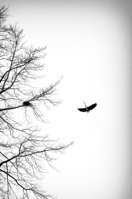 Heron-04.jpg