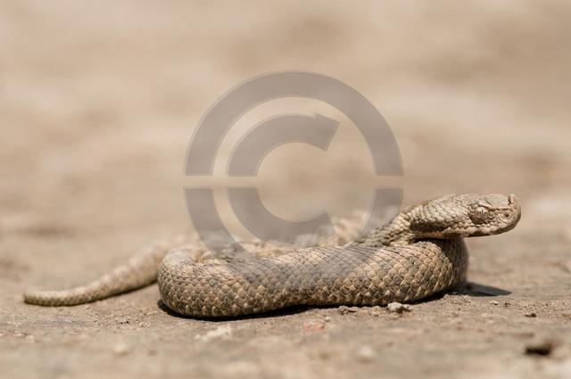 Tiere-Reptilien-2.jpg