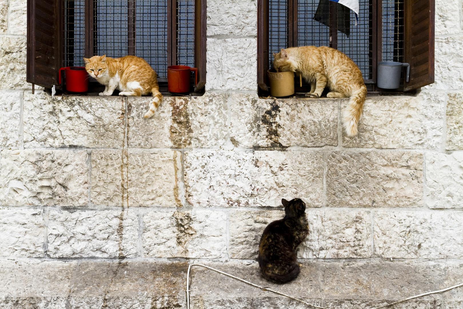 Jerusalem, Israel. 2010.