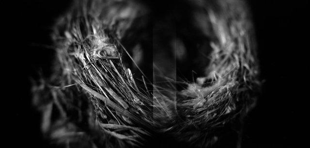 Nest, Bell's Vireo (<i>Vireo bellii</i>), Holga 120N, Ilford Delta Pro 100, 2015
