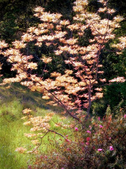Leaves_in_the_Sun.jpg