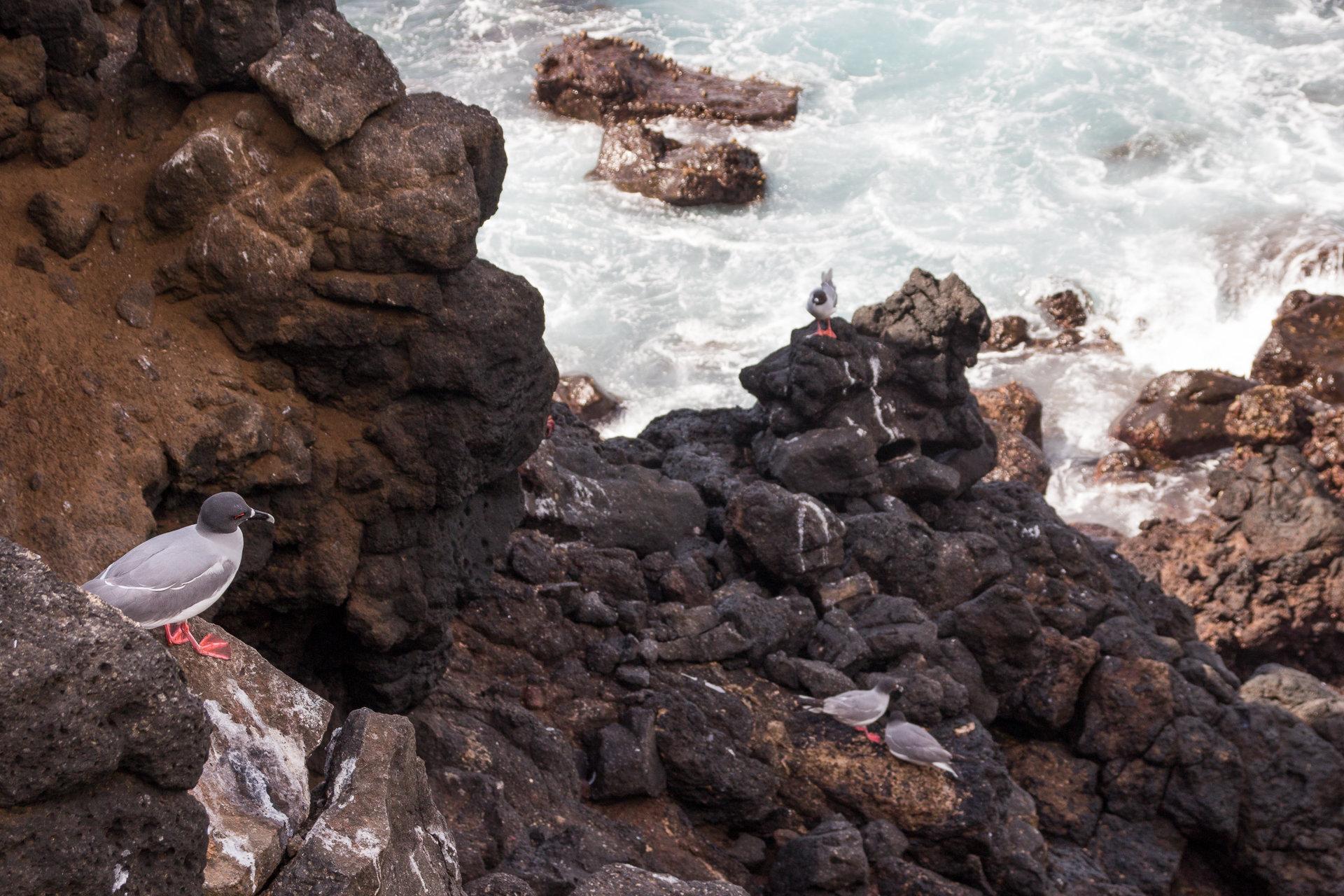 150419_Galapagos-1206.jpg