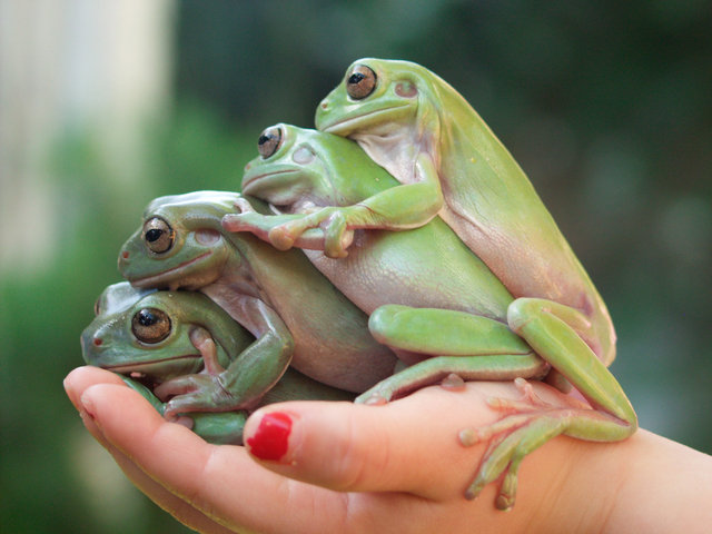 Handful of Frogs