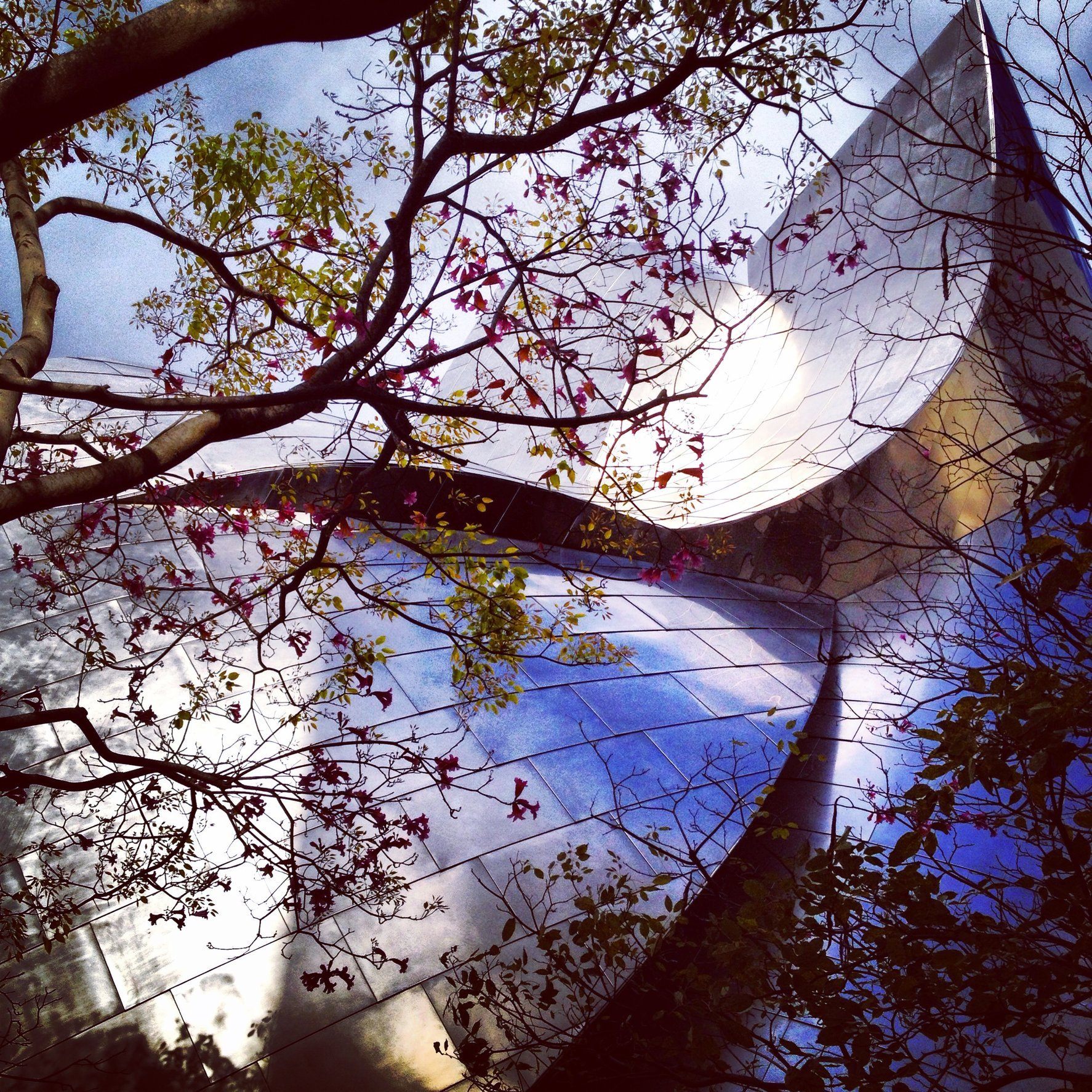 WALT DISNEY CONCERT HALL - ROSE 13