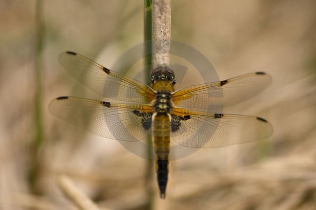 Insekten_Copyright_323.jpg