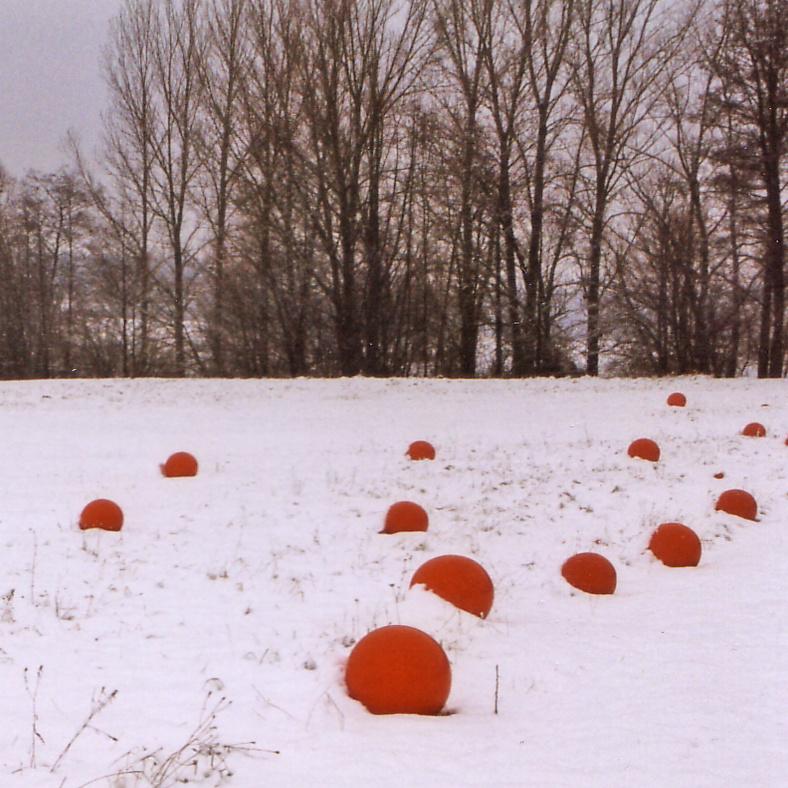 bollenveld sneeuw.jpg