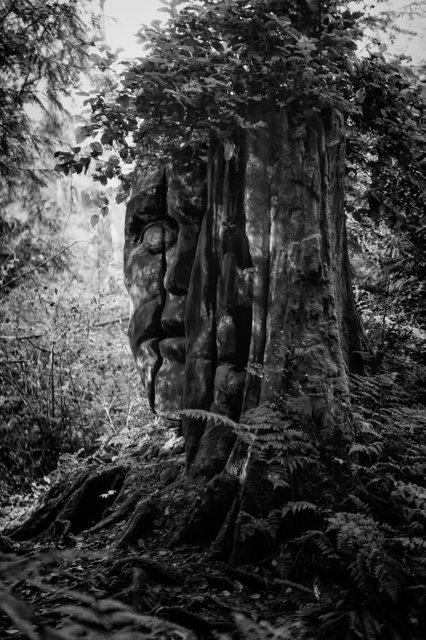 Tree-bw90.jpg