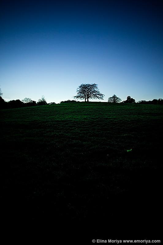 emoriya_landscape_0367.jpg