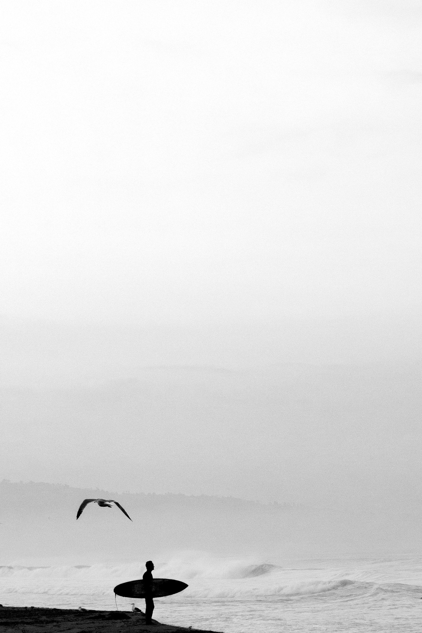 2014-9-Surfer and Bird.jpg