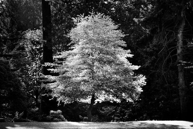 Tree-bw66.jpg