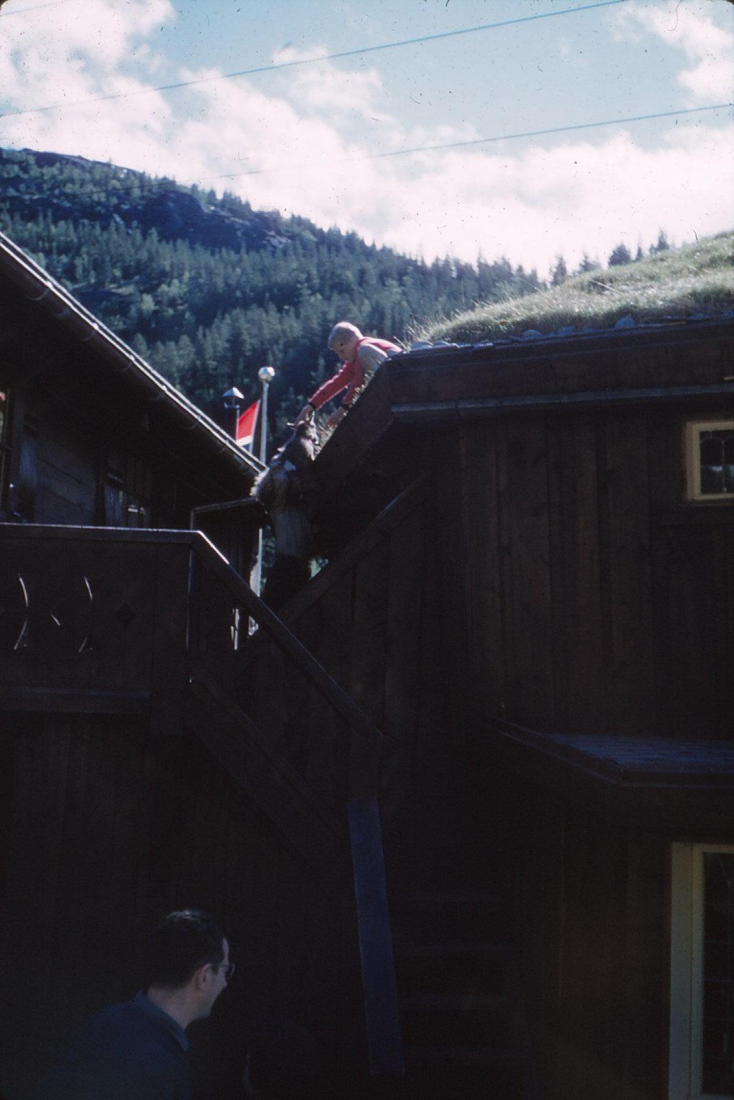 1174 (24) Geit op het dak.