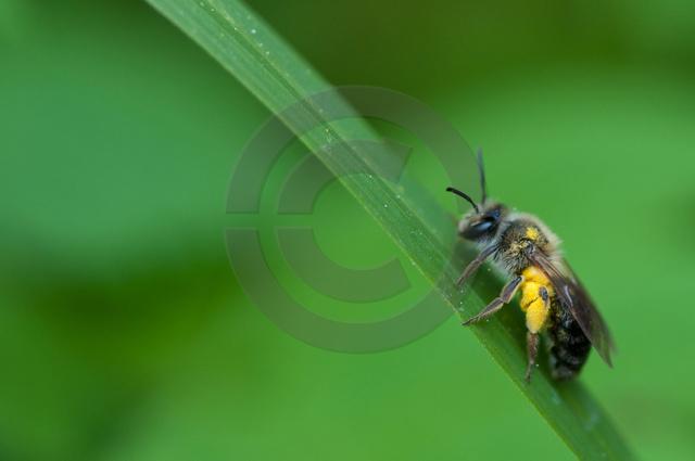 Insekten_Copyright_169.jpg