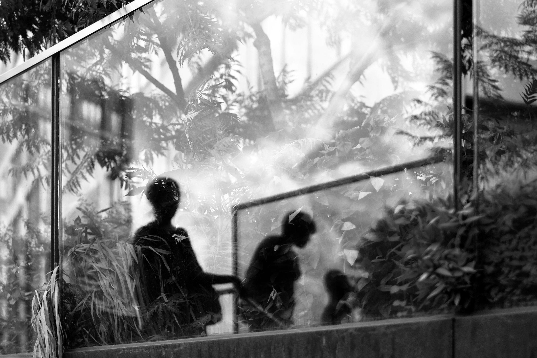 urban-jungle.jpg
