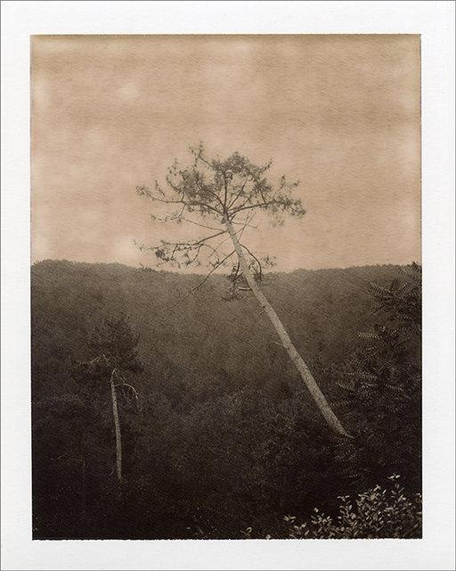 Lone Tree 1