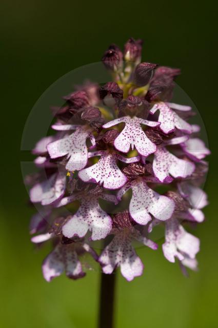 Pflanzen_Copyright_474.jpg