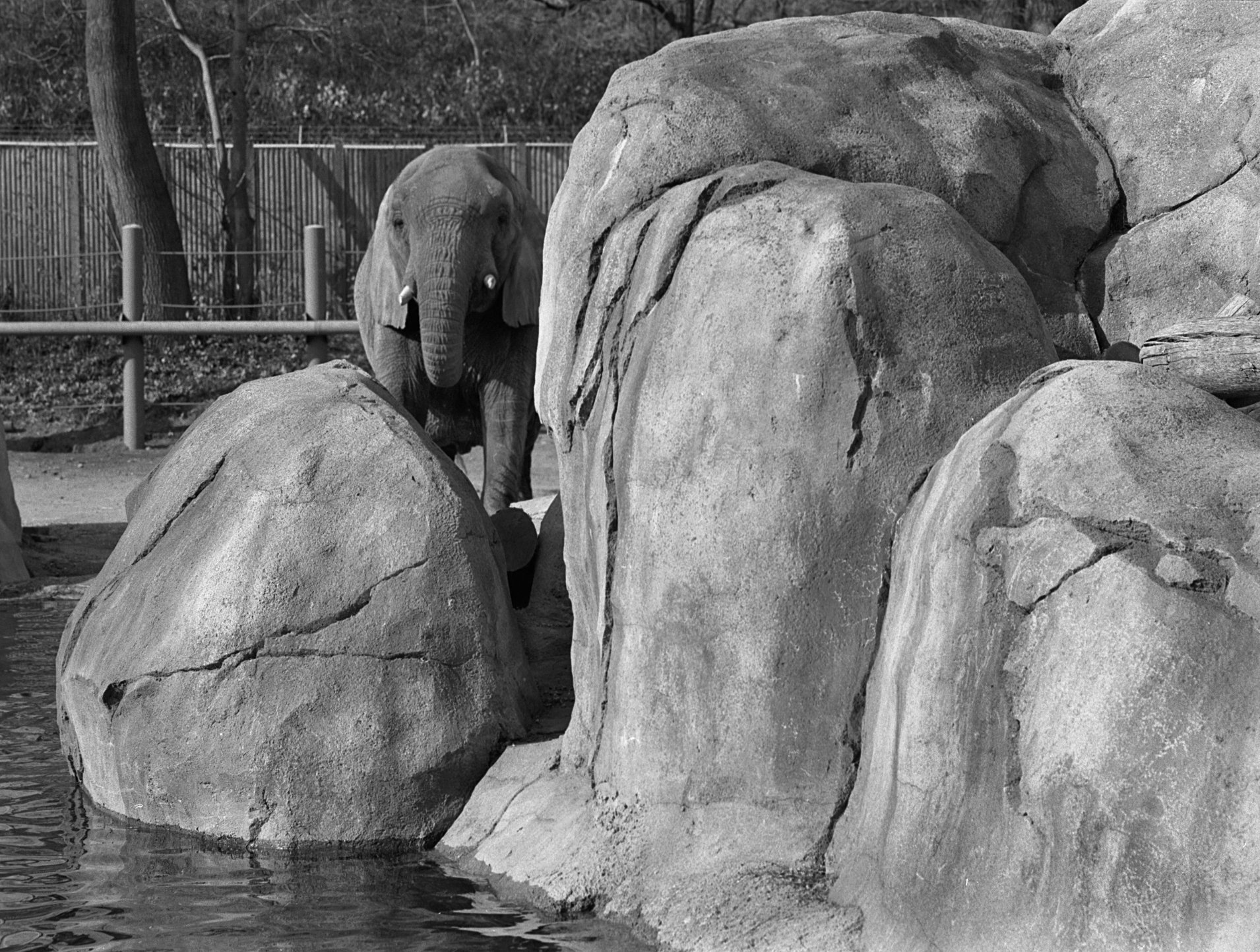 Elephant Forms Series #19.jpg