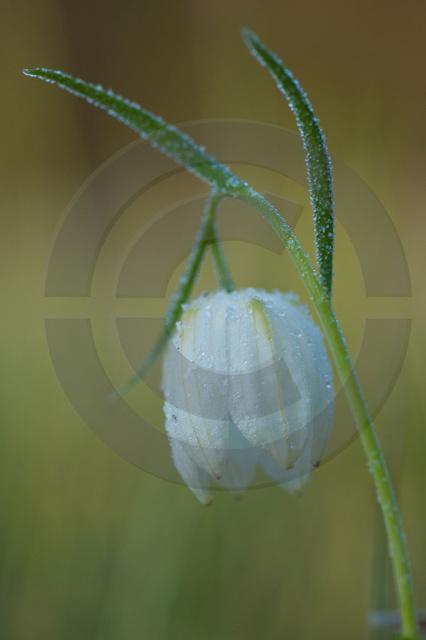 Pflanzen_Copyright_455.jpg