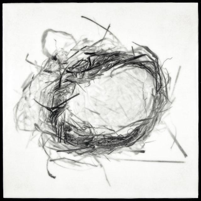Nest XVII
