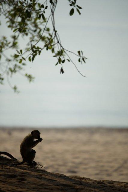 Malawi_016.jpg