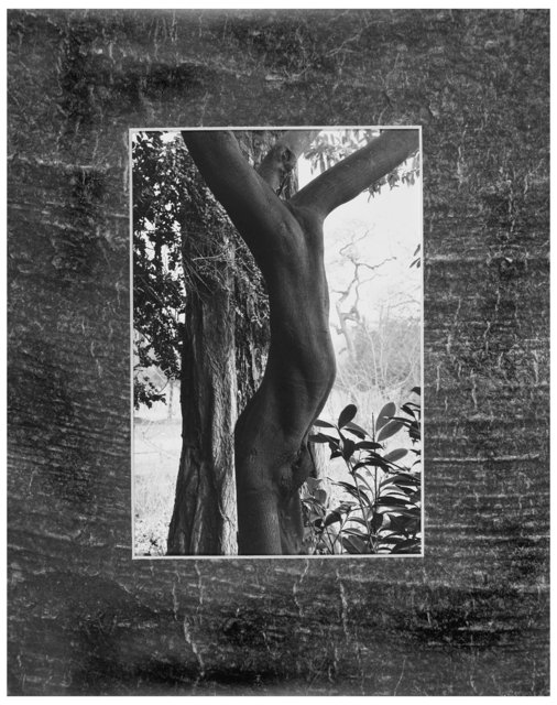 Trees  32.jpg