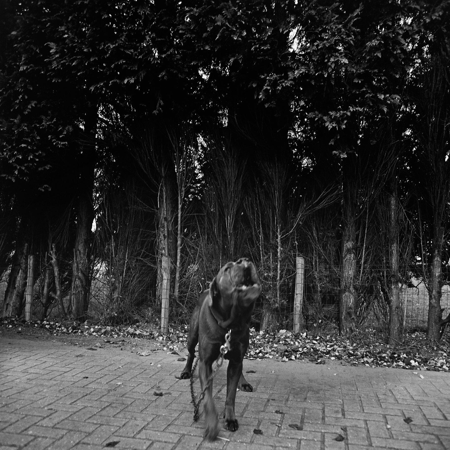 hond - 2006-03-21 at 13-55-32.jpg