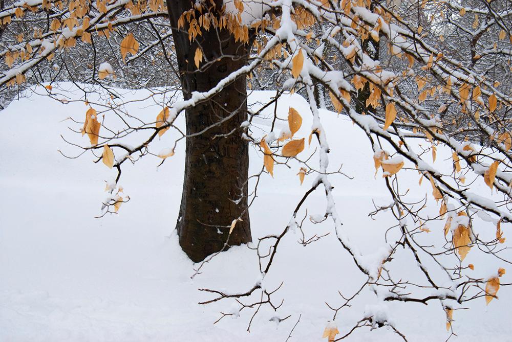 Frigid Branches, Central Park