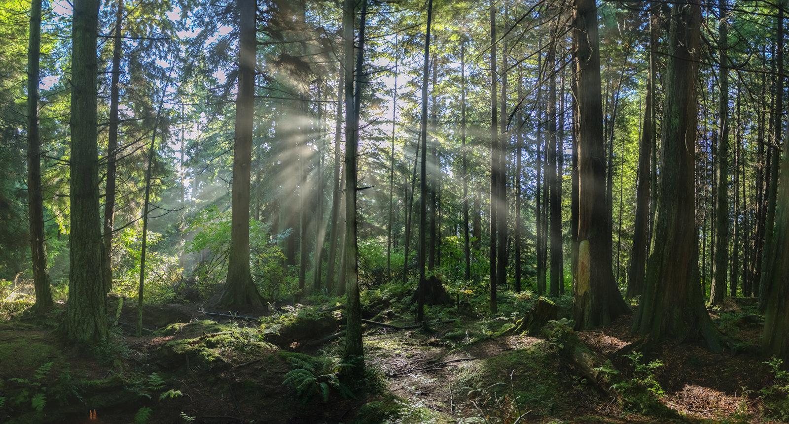 Stanley Forest2.jpg